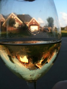A view through Chardonnay